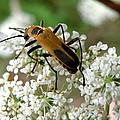 Bug And Flowers by Jiayin Ma