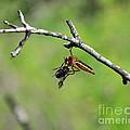 Bug Eat Bug by Al Powell Photography USA