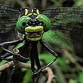Bug-eyed by Doug McPherson