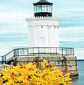 Bug Light by Greg Fortier