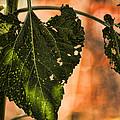 Buggilicious by Bonnie Bruno