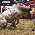 Bull 1 - Cowboy 0 by Elizabeth Hart