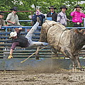 Bull 1 - Rider 0 by Sean Griffin