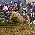 Bull Rider 2 by Sean Griffin