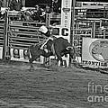 Bull Rider by Shawn Naranjo
