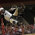 Bull Riding by Ali Zaidi