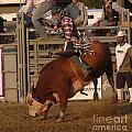 Bull Riding by Bobbylee Farrier