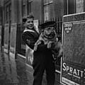 Bulldog Beauty by London Express