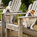 Bulldogs Relaxing At The Beach by Bill Swindaman