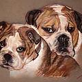 Bulldogs by Ylli Haruni