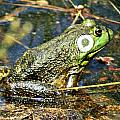 Bullfrog 1 by Joe Faherty