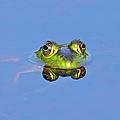 Bullfrog by Brian E. Kushner