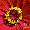 Bullseye by Susan Herber