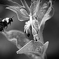 Bumble Bee 4 by Scott Hovind