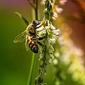 Bumble Bee by Linda Tiepelman