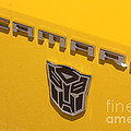 Bumble Bee Logo-7909 by Gary Gingrich Galleries
