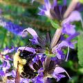 Bumble Bee On Flower by Renee Trenholm