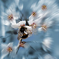 Bumble Bee by Svetlana Sewell