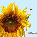 Bumble Bees Love Sunflowers by Beverly Kobee