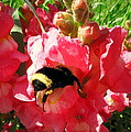 Bumblebee And Snapdragon by Joyce Dickens