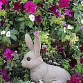 Bunny by Vijay Sharon Govender
