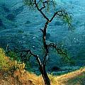 Burned Oak Tree Calabasas by Noah Brooks