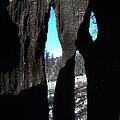Burned Trees 10 by Naxart Studio