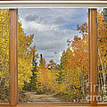 Burning Autumn Aspens Back Country Colorado Window View by James BO  Insogna