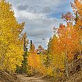 Burning Orange And Gold Autumn Aspens Back Country Colorado Road by James BO Insogna