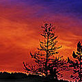 Burning Sunrise by Janie Johnson