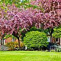 Bursting Blossoms by Faith Harron Boudreau