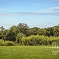 Busch Gardens Landscape by Carol  Bradley