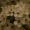 Bushel Of Flowers by Christofer Johnson