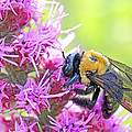 Busy As A Bee by Becky Lodes