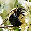 Busy As A Bee by Joe Faherty