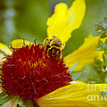 Busy Bee by Anjanette Douglas