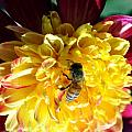 Busy Bee On Yellow Flower by Mark Valentine