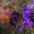 Busy Spicebush Butterfly by J Larry Walker