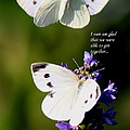 Butterflies - Cabbage White - Enjoyed The Togetherness by Travis Truelove