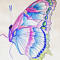 Butterflly Print by Linda Pope