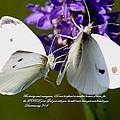 Butterfly - Dueteronomy 31 6 by Travis Truelove