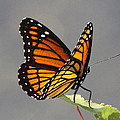 Butterfly - Sitting On The Green by Travis Truelove