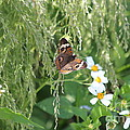 Butterfly 14 by Michelle Powell