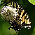 Butterfly 2 by Joe Faherty
