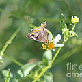 Butterfly 21 by Michelle Powell