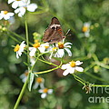 Butterfly 24 by Michelle Powell