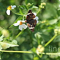 Butterfly 25 by Michelle Powell
