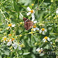 Butterfly 30 by Michelle Powell