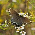 Butterfly 3325 by Michael Peychich