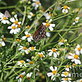 Butterfly 35 by Michelle Powell